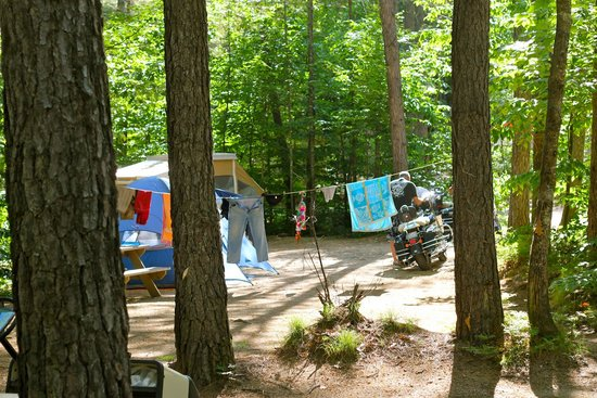 Chocorua Camping Village: Campground - Tent Site