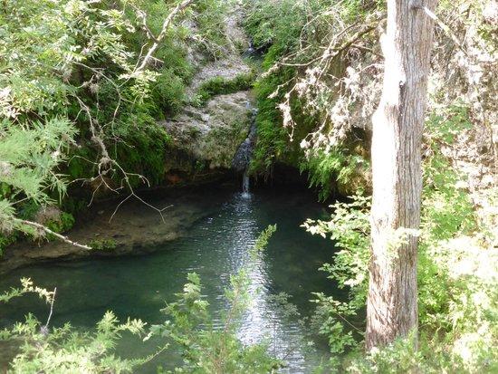 Pedernales Falls State Park: Twin Falls, a lush grove