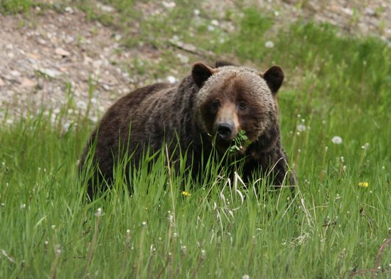 Delta Hotels by Marriott Kananaskis Lodge: the  wildlife
