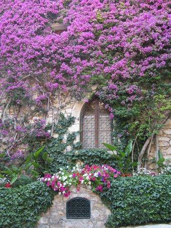 Vieux Eze : prachtige bloemen