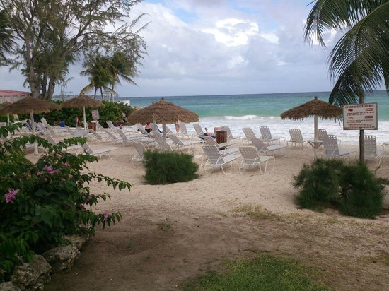 Bougainvillea Beach Resort: Take your pick of sunloungers