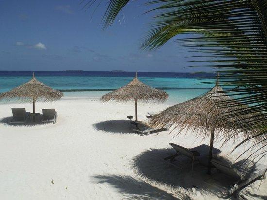 Gangehi Island Resort : Beach