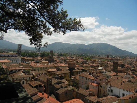 Guinigi Tower: Vista da Torre Guinigi a Lucca