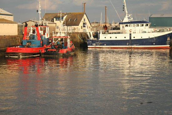 Wee Hurrie: The harbour