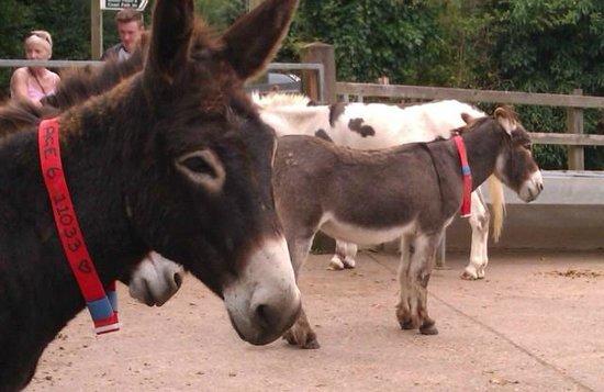 The Donkey Sanctuary: Donkeys of all descriptions