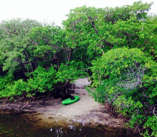 John D. MacArthur Beach State Park: Kayaking