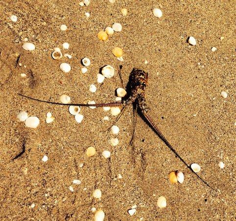 John D. MacArthur Beach State Park: Wild sea life