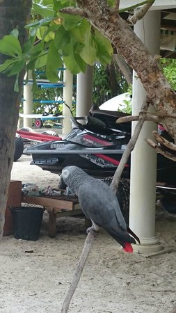 Royal Island Resort & Spa: Mr Loud