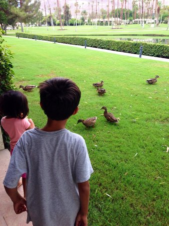 Omni Rancho Las Palmas Resort & Spa: Feeding the ducks