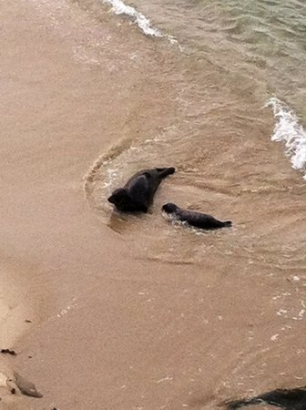 La Jolla Cove: Seals on the beach