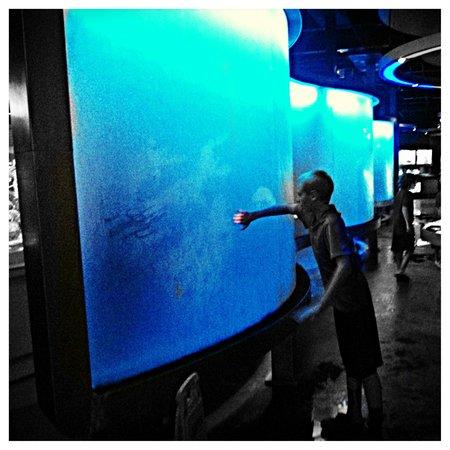 National Mississippi River Museum & Aquarium: Hands on exhibits.
