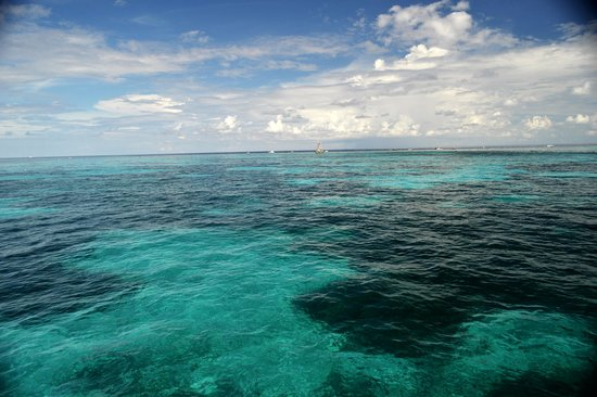 John Pennekamp Coral Reef State Park : Third largest Coral Reef in the world below