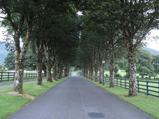 The Dunloe: Entry drive