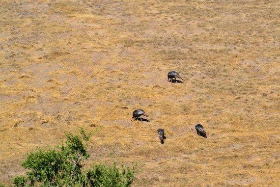 Sierra Mar : Wild Turkey