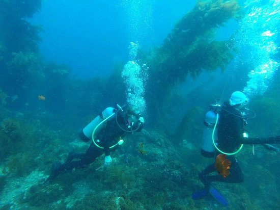 Diving Catalina: And more