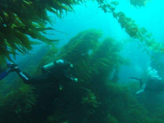 Diving Catalina: great diving