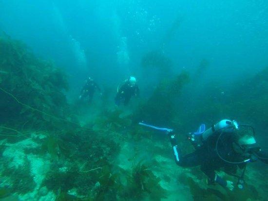 Diving Catalina: good times