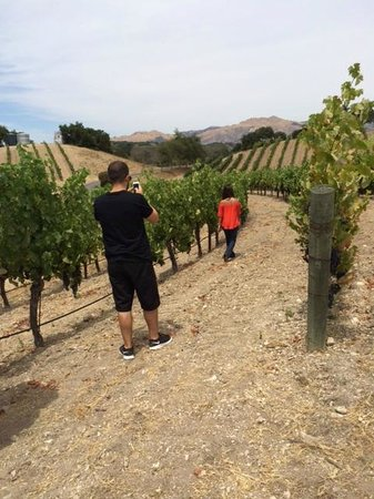 Sustainable Vine Wine Tours : Tasting grapes and taking pictures
