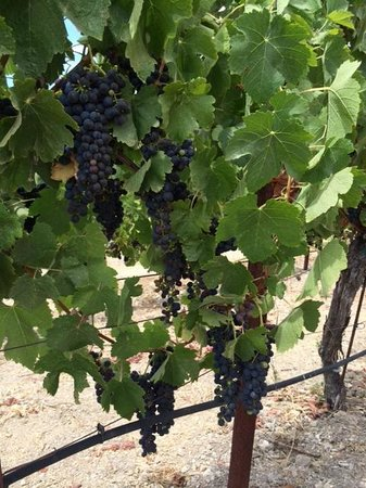 Sustainable Vine Wine Tours : Biodynamically farmed
