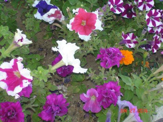 Americas Best Value Inn Green River: Lovely flower bed