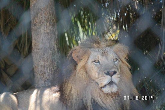Naples Zoo at Caribbean Gardens: The Big Guy!