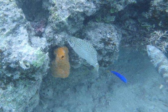 Funky Fish Surf & Beach Resort: Snorkeling