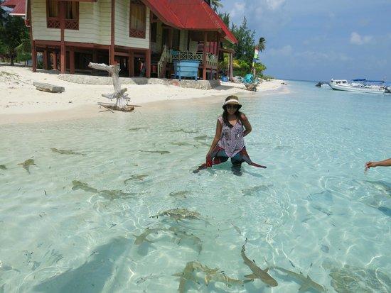 Taman Nasional Taka Bonerate: bermain bersama hiu di pantai Tinabo