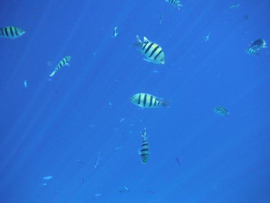 Coral Sea Sensatori - Sharm El Sheikh: Snorkelling on Jackson's reef
