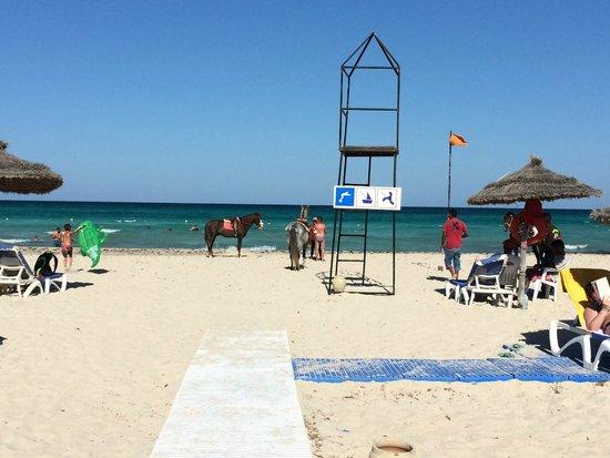 Vincci Helios Beach : in arrivo in spiaggia