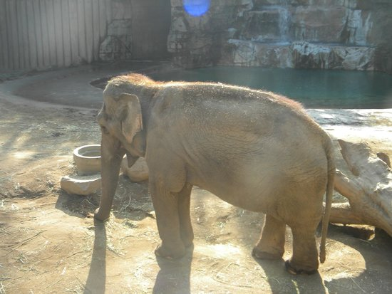 Fresno Chaffee Zoo: Asian elephant exhibit