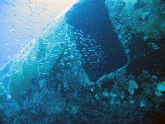 Renaissance Aruba Resort & Casino: DC-3 Wreck off the Private Island