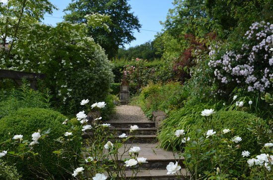 Dalwood, UK: Burrow Farm Gardens - Roses