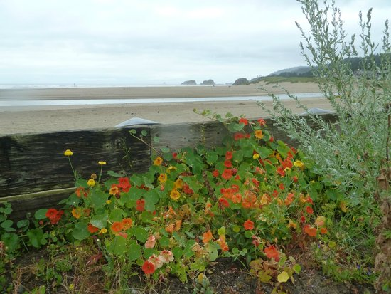The Waves : View from lovely flower gardens