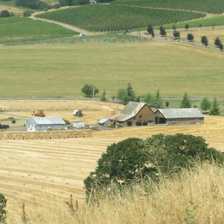 Oregon Wine Tours: View from Van Duzer Winery