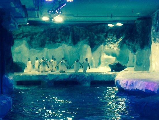 National Sea Life Centre: Penguin