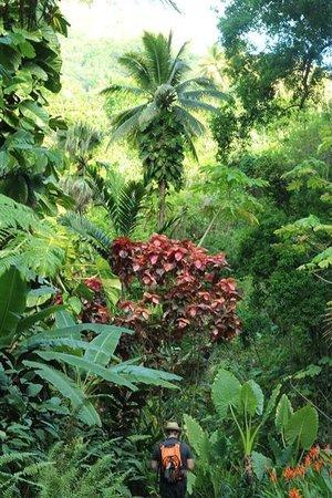 Villa Pomme d'Amour : Botanical Garden Soufriere