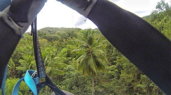 Villa Pomme d'Amour : Ziplining