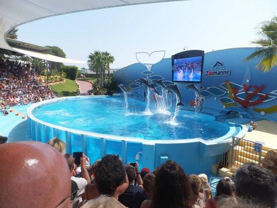 Zoomarine Algarve: Dolphin show