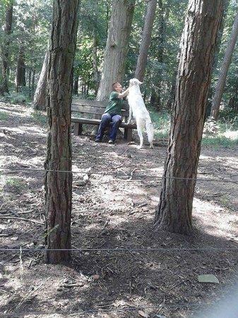 Wildpark Alte Fasanerie Klein-Auheim: Wolf
