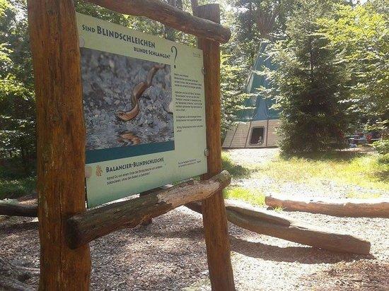 Wildpark Alte Fasanerie Klein-Auheim: Schlange