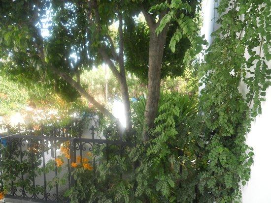 Ikaros Studios & Apartments: Garden