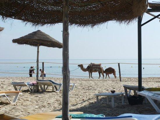 Marhaba Beach Hotel: Beach