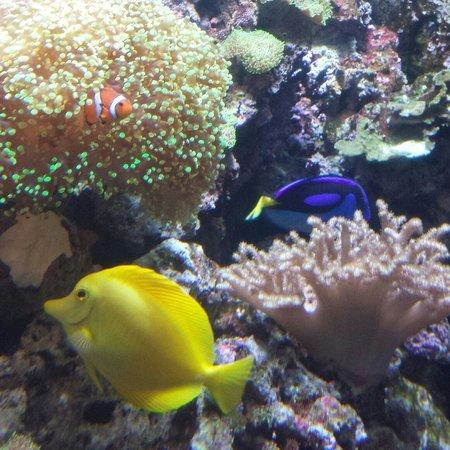 Texas State Aquarium: We found Nemo