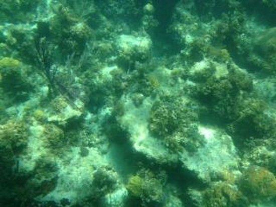 Undersea Explorer: Coral
