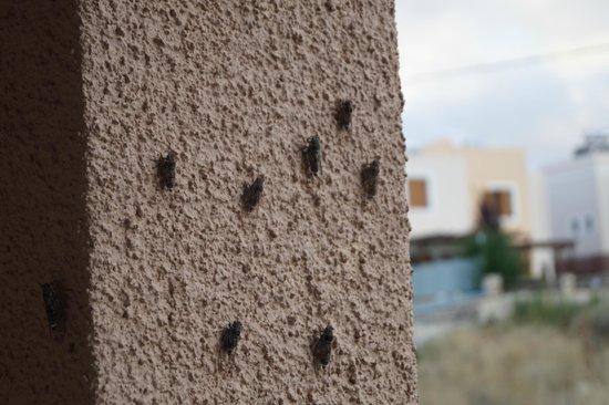 Hotel Areti Megala Horafia: Crickets, your surrounding friends