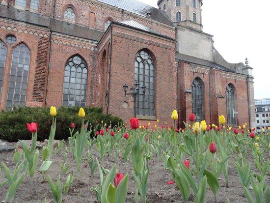 NB Hotel: Тюльпаны у собора