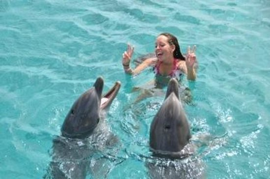 Dolphin Academy Curacao: Singing Along