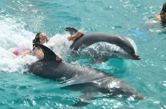 Dolphin Academy Curacao: Calgon has nothing on these dolphins :)