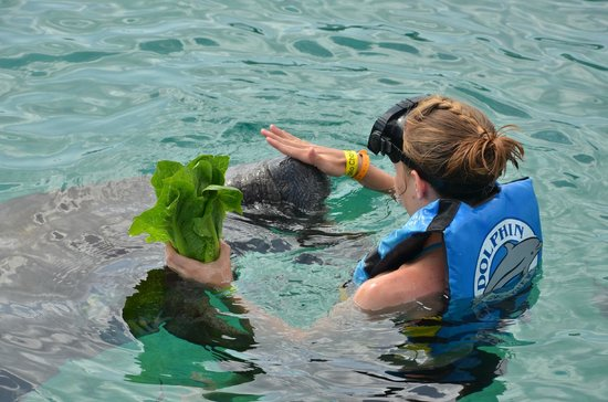 Chankanaab Beach Adventure Park: encounter with manatee