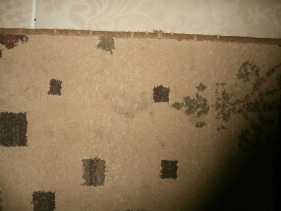 Albatros Palace Resort : Stains in the carpet